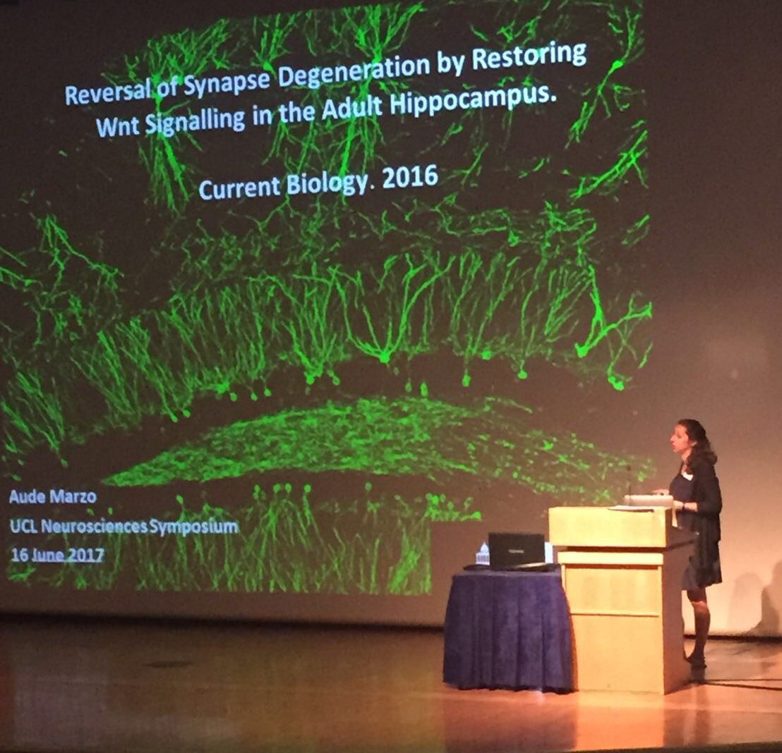 Postdoctoral Fellow Awarded the UCL Neuroscience Early Career Prize